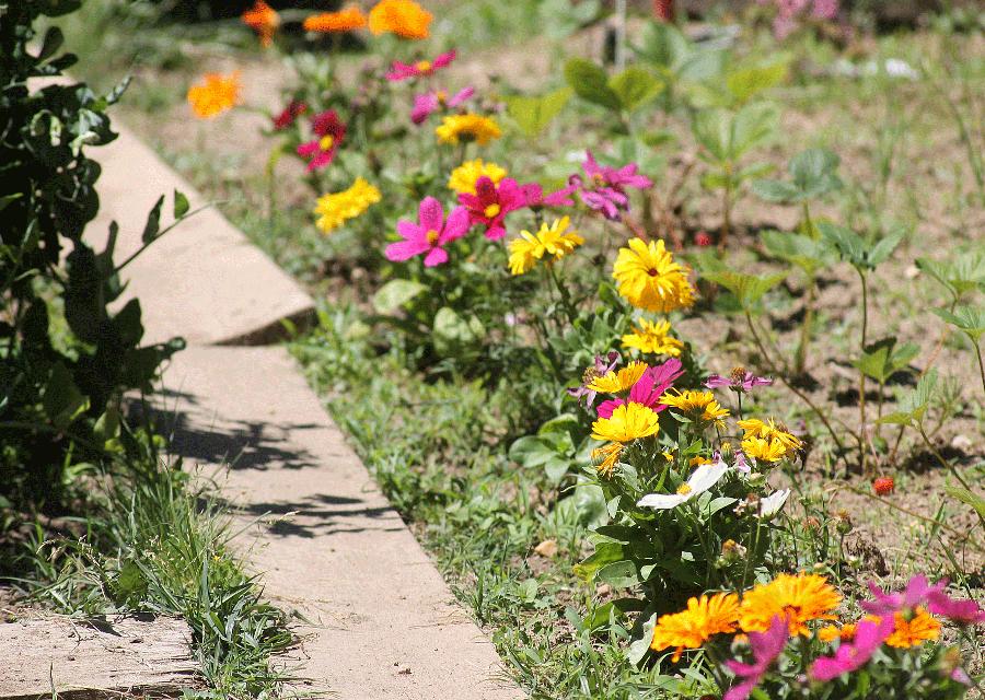 fleurscomestibles2